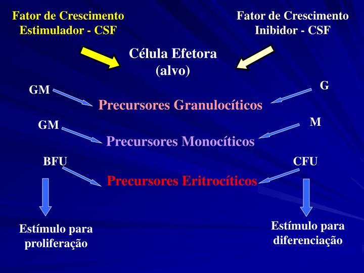 Fator de Crescimento Estimulador - CSF