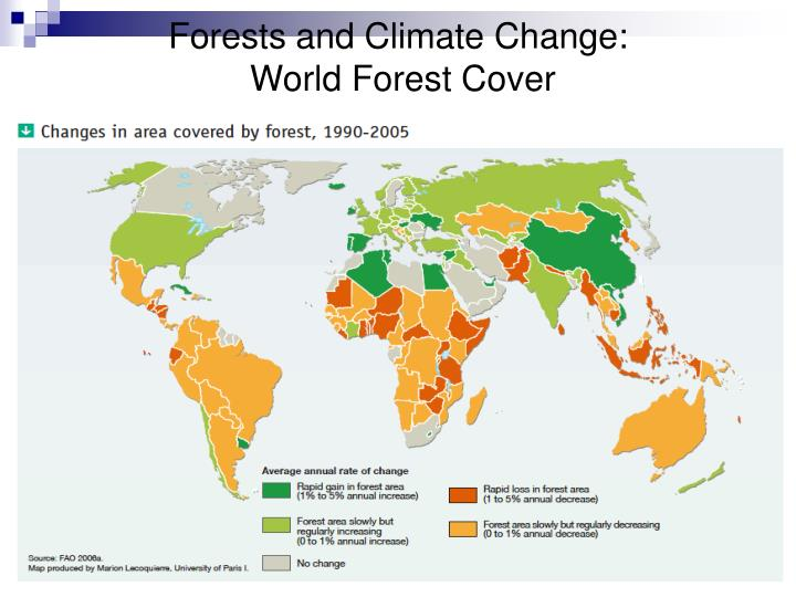Forests and Climate Change:
