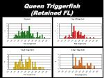 queen triggerfish retained fl