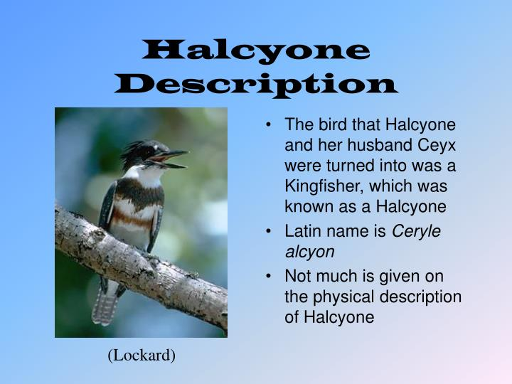 Halcyone Description