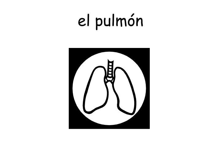el pulmón
