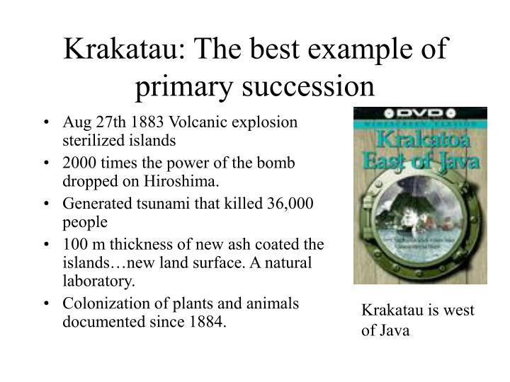Krakatau: The best example of primary succession