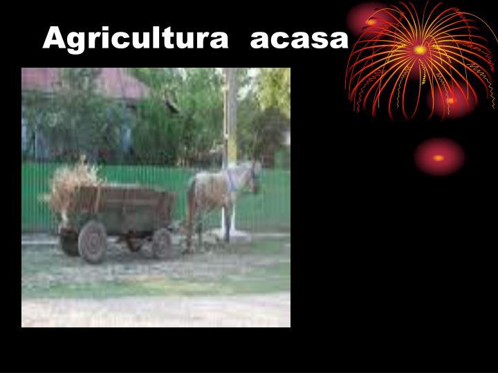 Agricultura  acasa