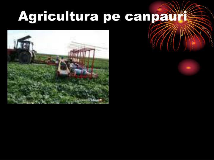 Agricultura pe canpauri