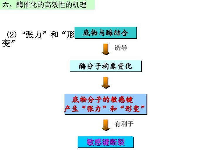 六、酶催化的高效性的机理