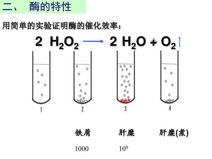 二、  酶的特性
