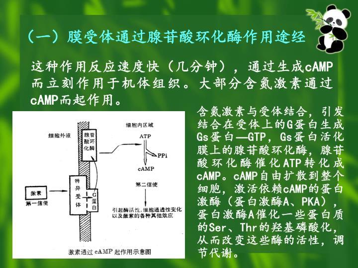 (一)膜受体通过腺苷酸环化酶作用途经