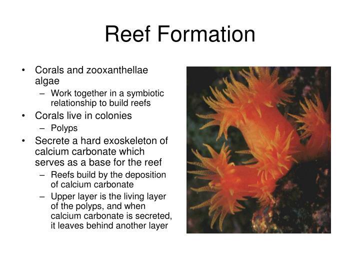 Corals and zooxanthellae algae