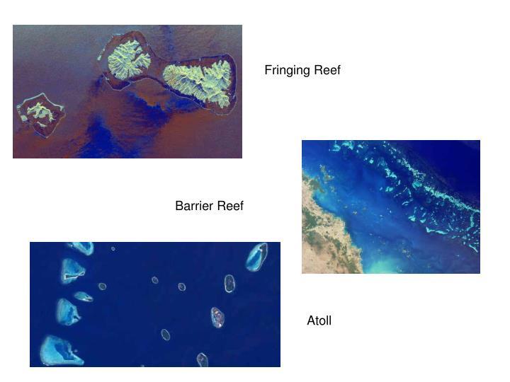Fringing Reef
