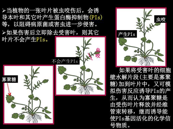 当植物的一张叶片被虫咬伤后,会诱导本叶和其它叶产生蛋白酶抑制物