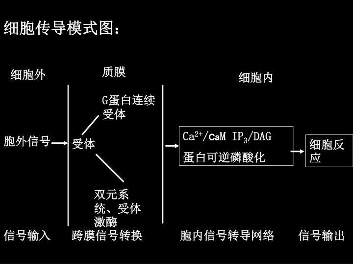 细胞传导模式图:
