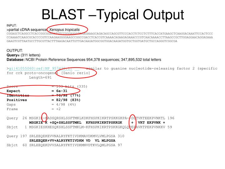 BLAST –Typical Output