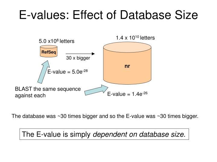 E-values: Effect of Database Size
