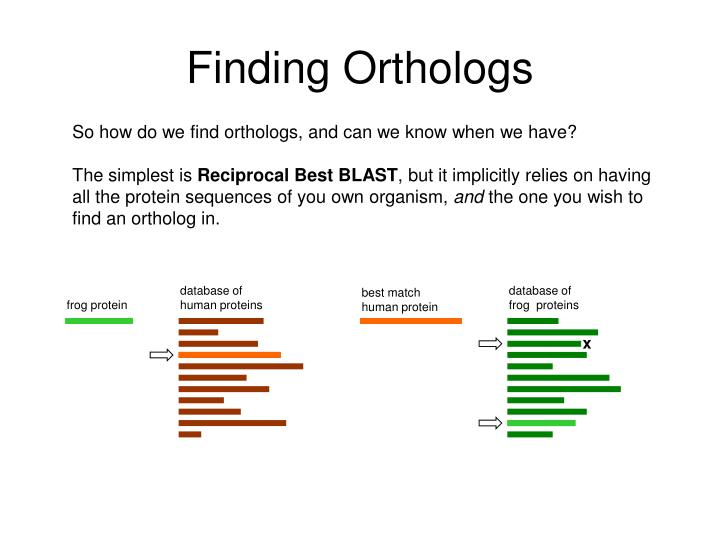 Finding Orthologs