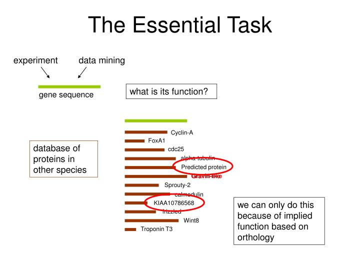 The Essential Task