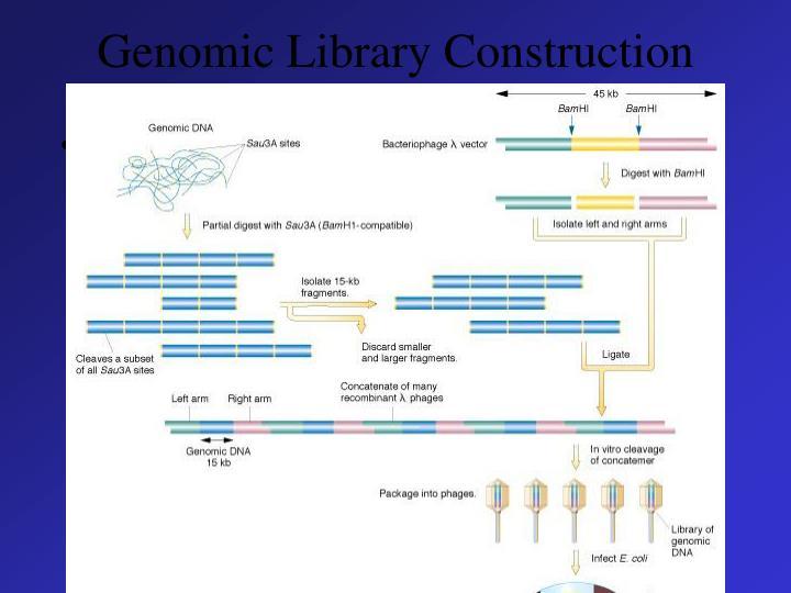 Genomic Library Construction