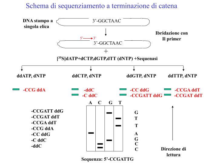 Schema di sequenziamento a terminazione di catena