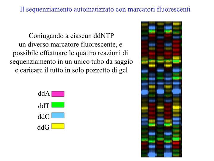 Il sequenziamento automatizzato con marcatori fluorescenti