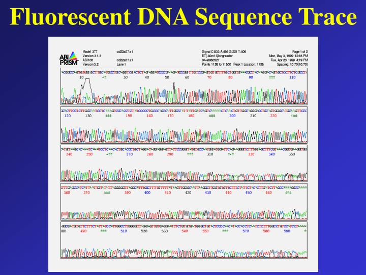 Fluorescent DNA Sequence Trace