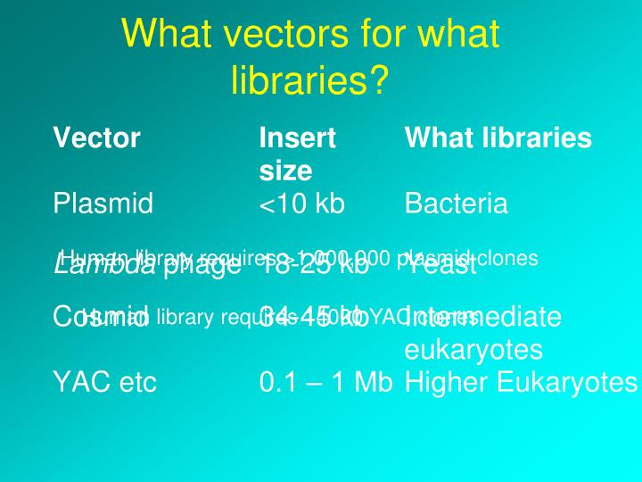 What vectors for what libraries?