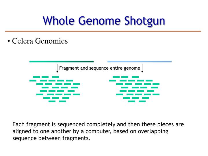 Fragment and sequence entire genome