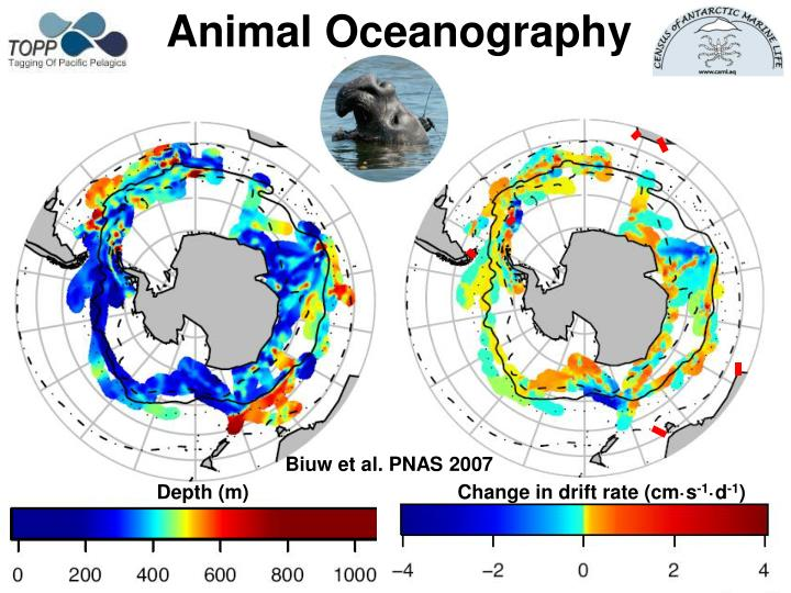 Animal Oceanography