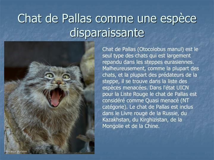 Chat de Pallas comme une esp