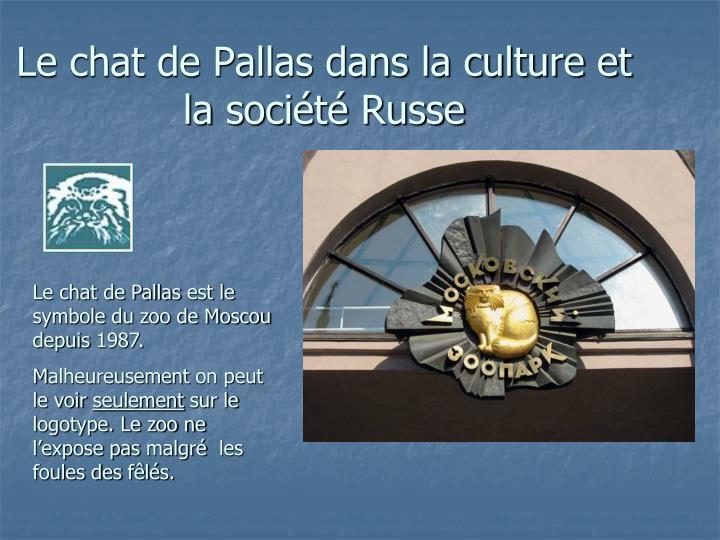 Le chat de Pallas dans la culture et la