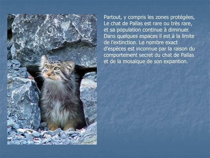 Partout, y compris les zones protégées, Le chat de Pallas est rare ou très rare, et sa population continue à diminuer. Dans quelques espaces il est à la limite de l'extinction. Le nombre exact d'espèces est inconnue par la raison du comportement secret du chat de Pallas et de la mosaïque de son expantion.