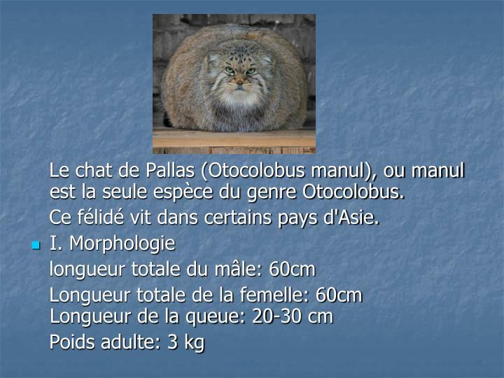 Le chat de Pallas (Otocolobus manul), ou manul est la seule espèce du genre Otocolobus.