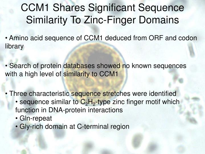 CCM1 Shares Significant Sequence