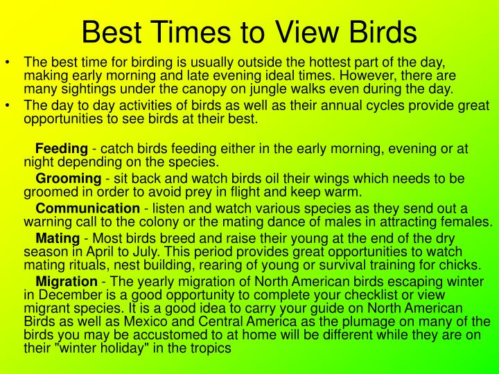 Best Times to View Birds