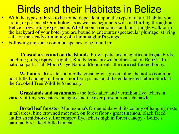 Birds and their Habitats in Belize