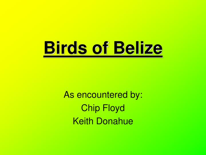 Birds of Belize