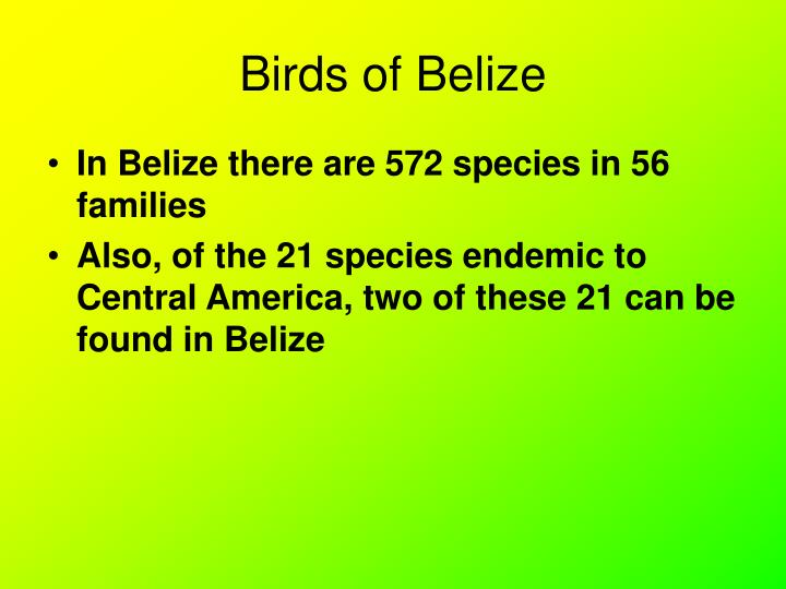 Birds of belize1