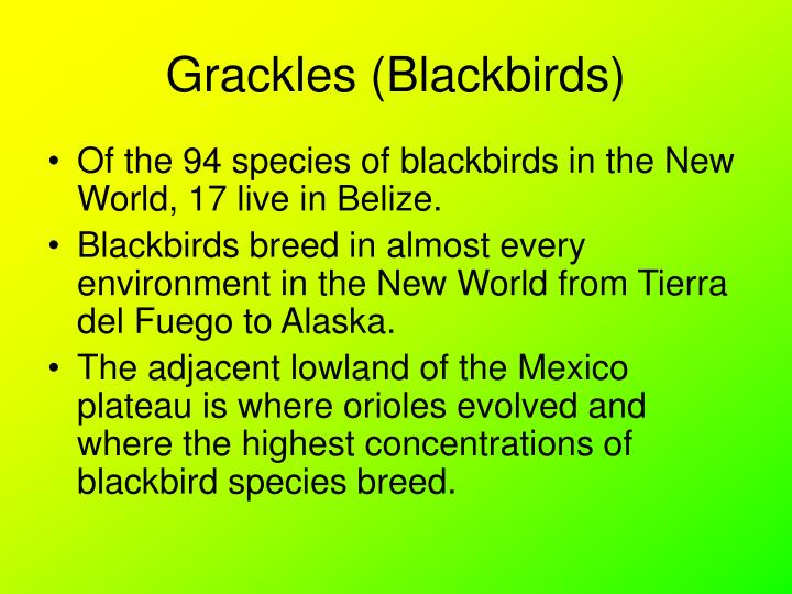 Grackles (Blackbirds)
