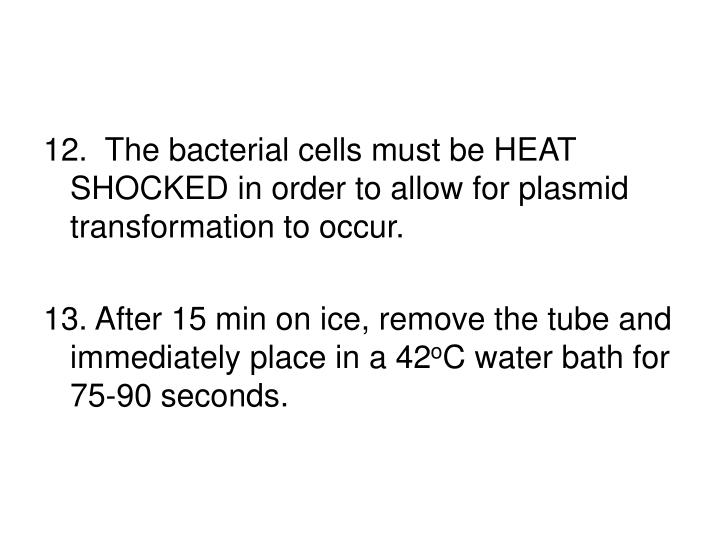 12.  The bacterial cells must be HEAT SHOCKED in order to allow for plasmid transformation to occur.