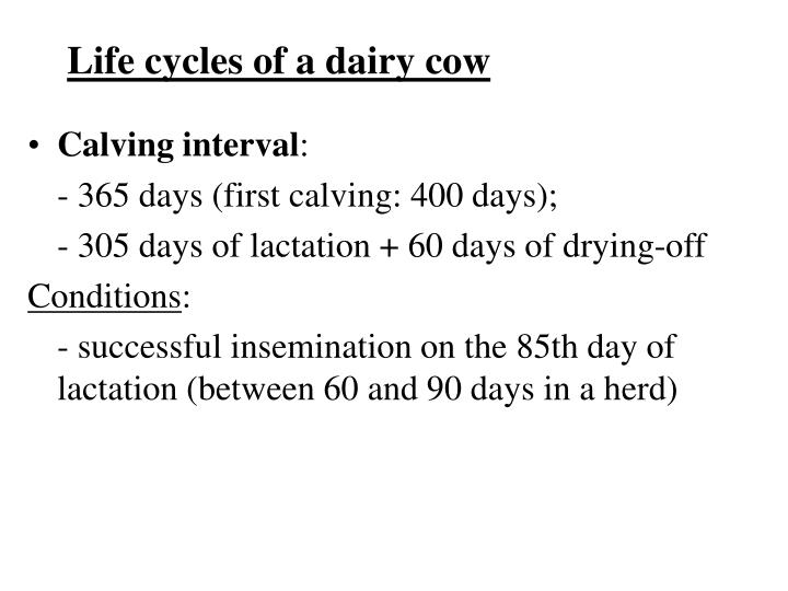 Life cycles of a dairy cow