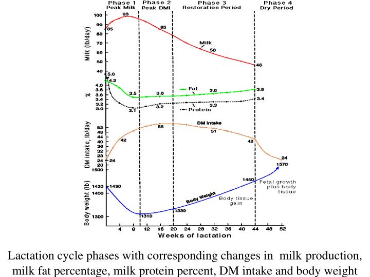 Lactation cycle phases with corresponding changes in  milk