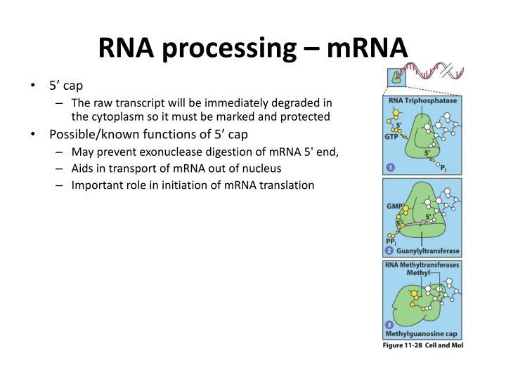 RNA processing – mRNA
