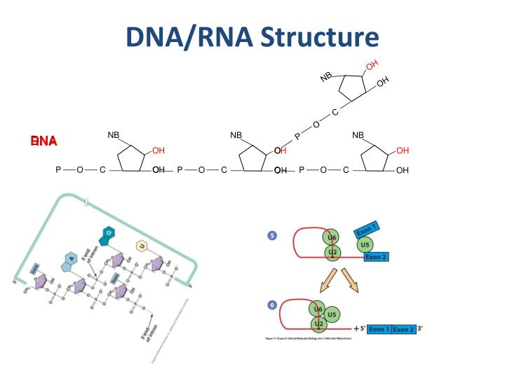 DNA/RNA Structure
