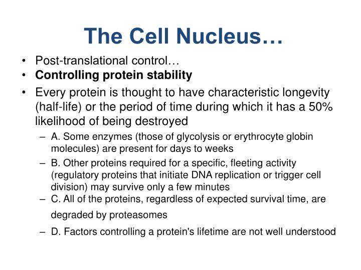 The Cell Nucleus…