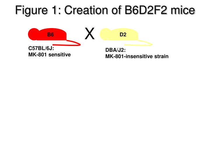 Figure 1: Creation of B6D2F2 mice