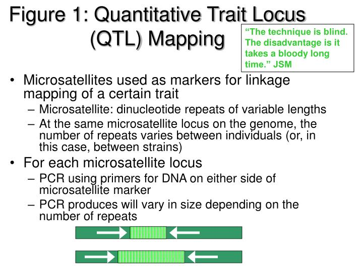 Figure 1: Quantitative Trait Locus (QTL) Mapping