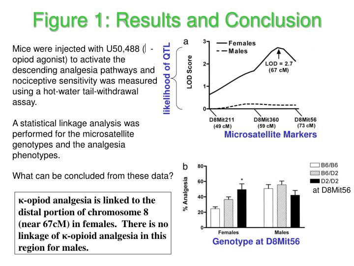 Figure 1: Results and Conclusion
