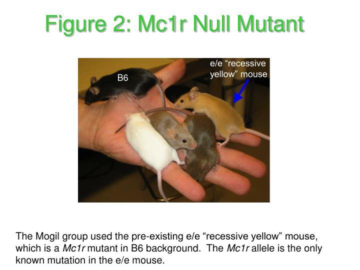Figure 2: Mc1r Null Mutant