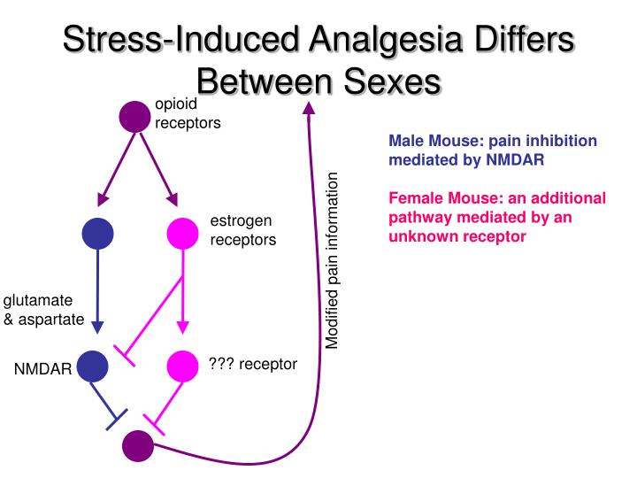 Stress-Induced Analgesia Differs Between Sexes