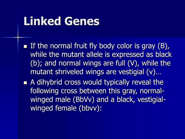 Linked Genes