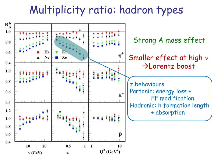 Multiplicity ratio: hadron types