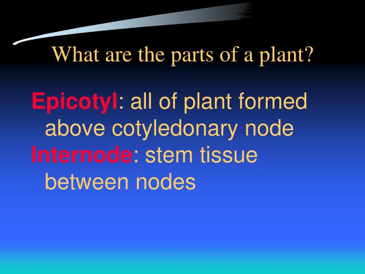 What are the parts of a plant?